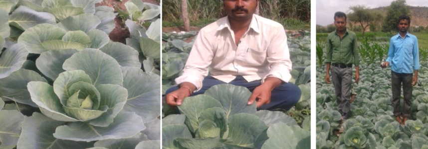Wealth Used Cabbage
