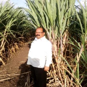 Wealth Used Sugarcane1