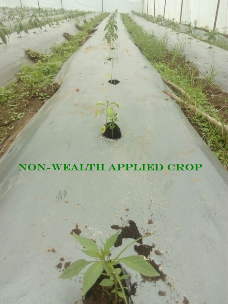 Non-wealth